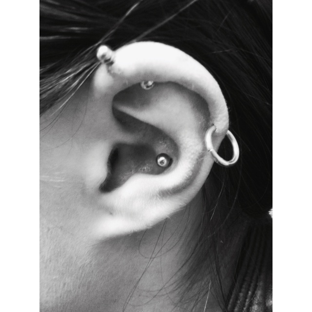 Conch Piercing Only